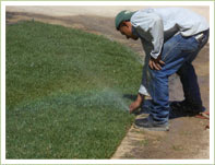 Adjust sprinklers after sod installation for proper coverage